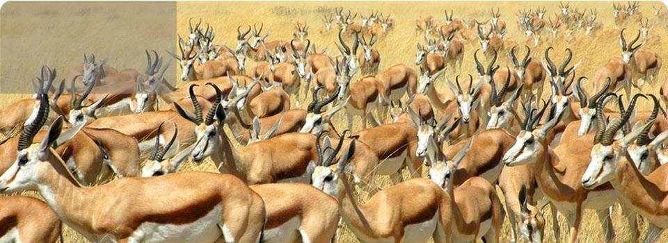 Namibia  partenza 25 agosto - Africa - Namibia