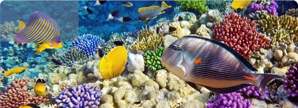 Mar Rosso   Queseir  e Berenice - Africa - Berenice e Quseir