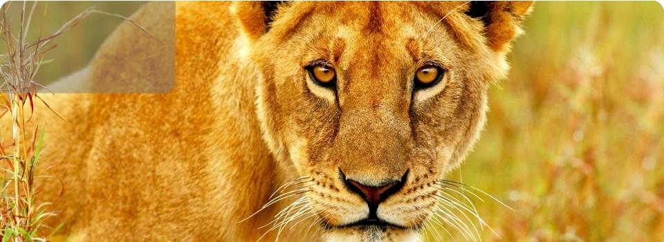 Sudafrica  Tour Classico partenza 09 ottobre 17 - Africa - Sudafrica