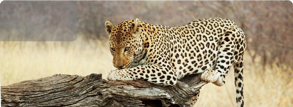Botwana e Okavango  2019 - Africa - Botwana e Okavango